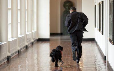 Footing : je cours avec mon chien